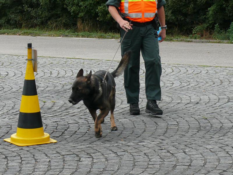 Auch Spürhunde müssen ´Gassi´ gehen / Bild: HZA