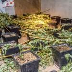 Plantage wird zerlegt / Foto: Alexander Baumbach